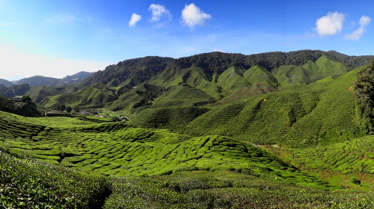 Cameron Highlands, in present-day Malaysia